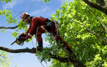 find trusted rated Hampshire tree surgeons