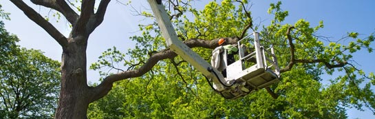 Hampshire tree surgery services