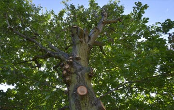what is Hampshire tree surgery?